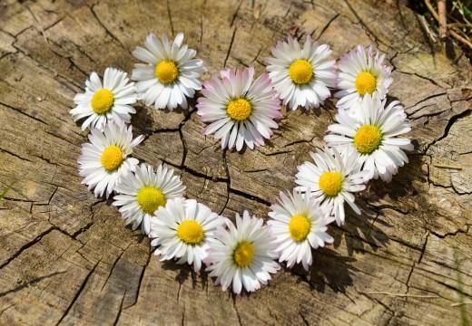 Fleurs sur une bûche, informations, pèlerinages